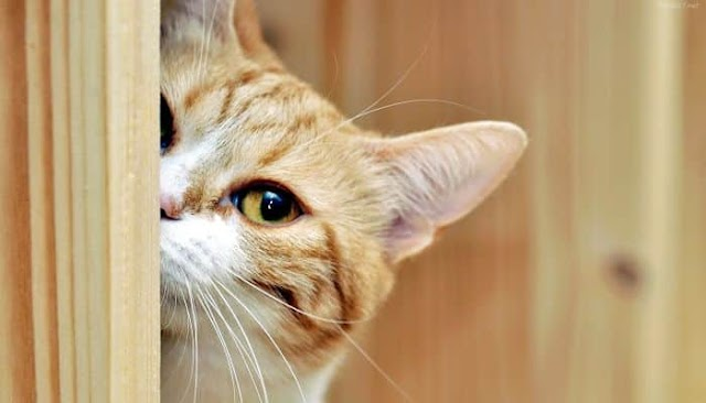 ¿Porque la curiosidad mato al gato?
