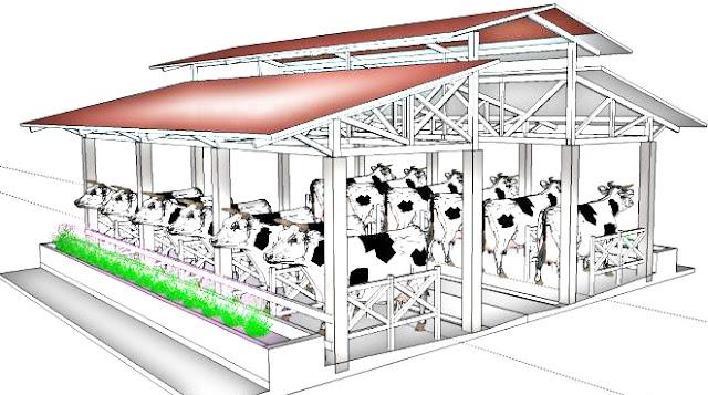 Mengetahui Desain Lantai Konstruksi Bangunan Kandang Sapi Potong yang Benar