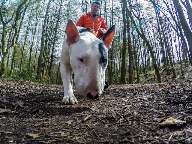 Glenn Johnstone amputee and Baxter English Bull terrier