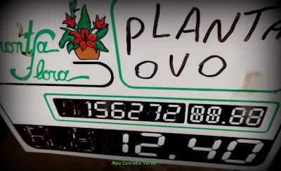 Valor PLANTA-OVO - ( Solanum ovigerum )