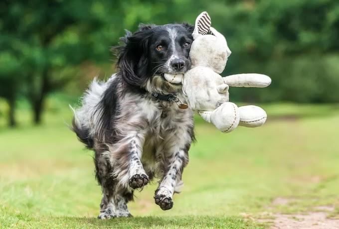 alerta sobre cuidados com animais de estimação: médica alerta, nesses tempos...