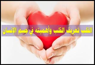 القلب تعريف القلب وأهميته في جسم الإنسان