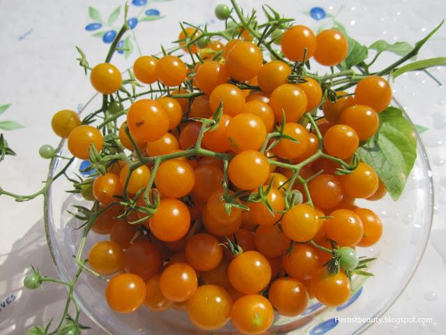 Wilde gelbe Tomaten