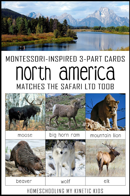 Learn about the North American animals as you explore and play with Safari Ltd North America toob.  Free printable matching cards for the toob.