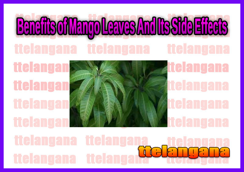 Benefits of Mango Leaves And Its Side Effects