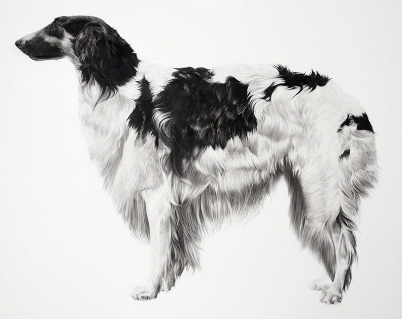 Hyperrealistic Drawings of Animals by Jonathan Delafield Cook