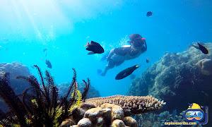 underwater wisata pulau pramuka