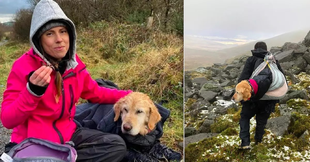 Video Shows The Rescue Of A Golden Retriever Who Was Lost For Two Weeks In The Wicklow Mountains