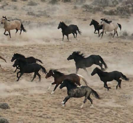 Лошадь и дикий океан