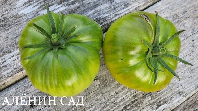 Малахитовая шкатулка, томаты, помидоры, сорта томатов, зеленые томаты, аленин сад