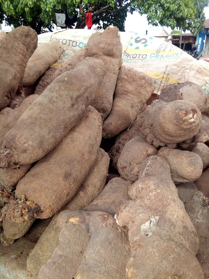 Where to buy Tubers of Yam in Kawo