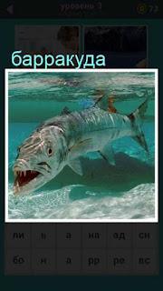 под водой плывет хищная рыба барракуда 667 слов 3 уровень