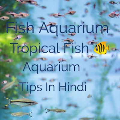 fish Aquarium tips in hindi, fish Aquarium