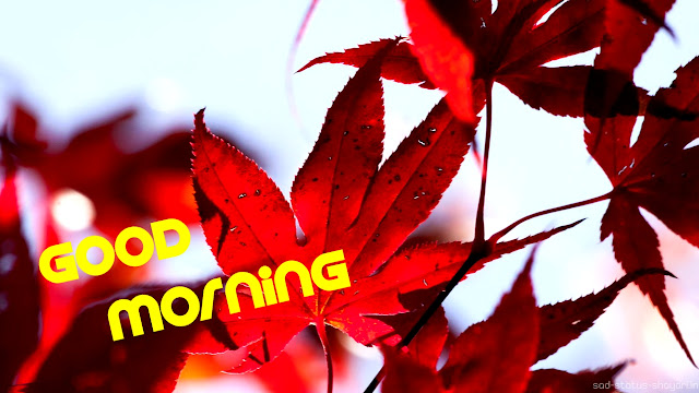 Good morning image red leaf