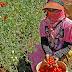 Journée internationale des femmes rurales : le Président du FIDA appelle les États à œuvrer pour que les femmes rurales cessent de subir de plein fouet les répercussions de la COVID-19