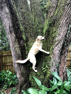 Tucker chasing squirrels