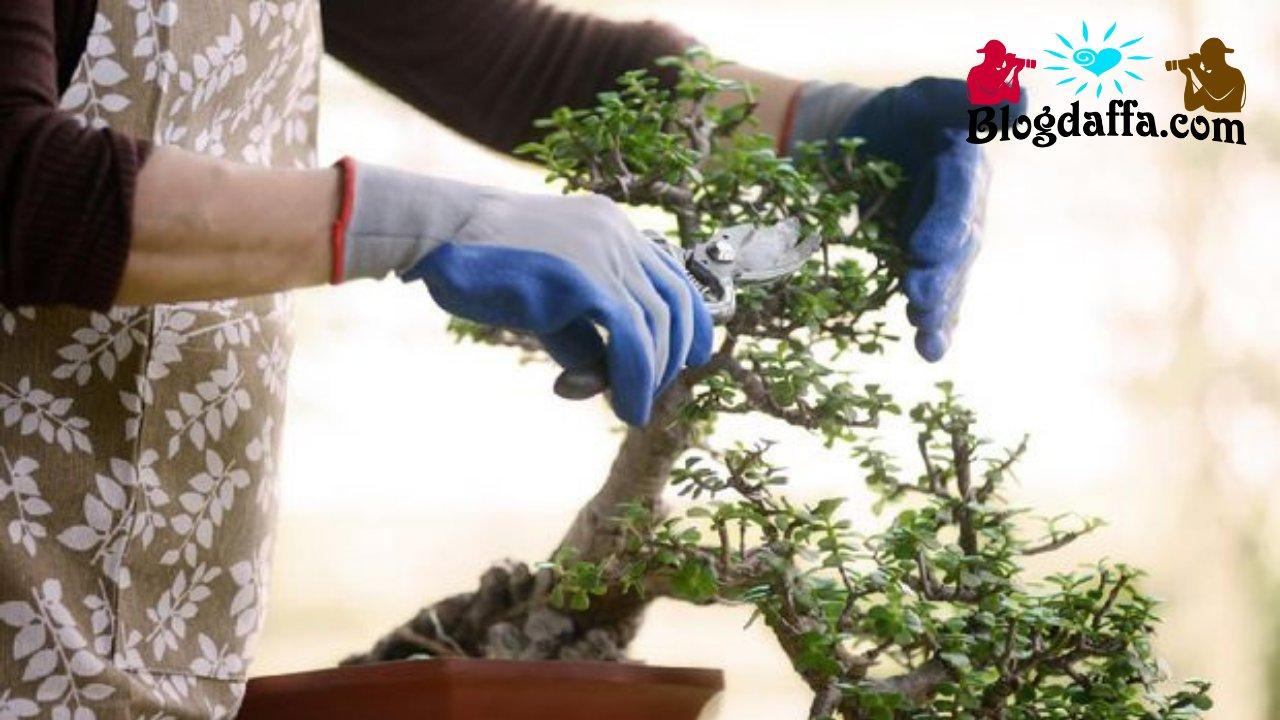Cara memangkas ranting bonsai