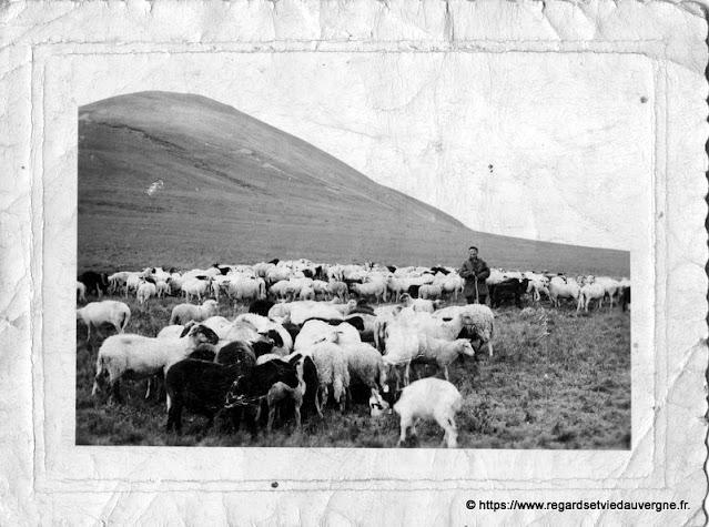 photo ancienne, moutons et leur berger.