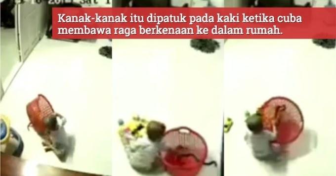 Video) Budak Dirakam CCTV Leka Main Dengan Ular, Jadi Mangsa Patuk Ular Berehat Dalam Bekas Mainannya