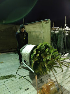 wrapping a real Christmas Tree for transport