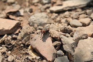Lalat, macro, photography