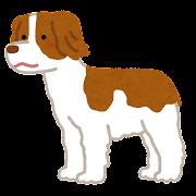 ブリタニースパニエルのイラスト(犬)