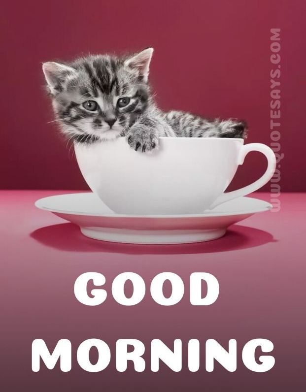 Beautiful Good Morning Little cat In cup