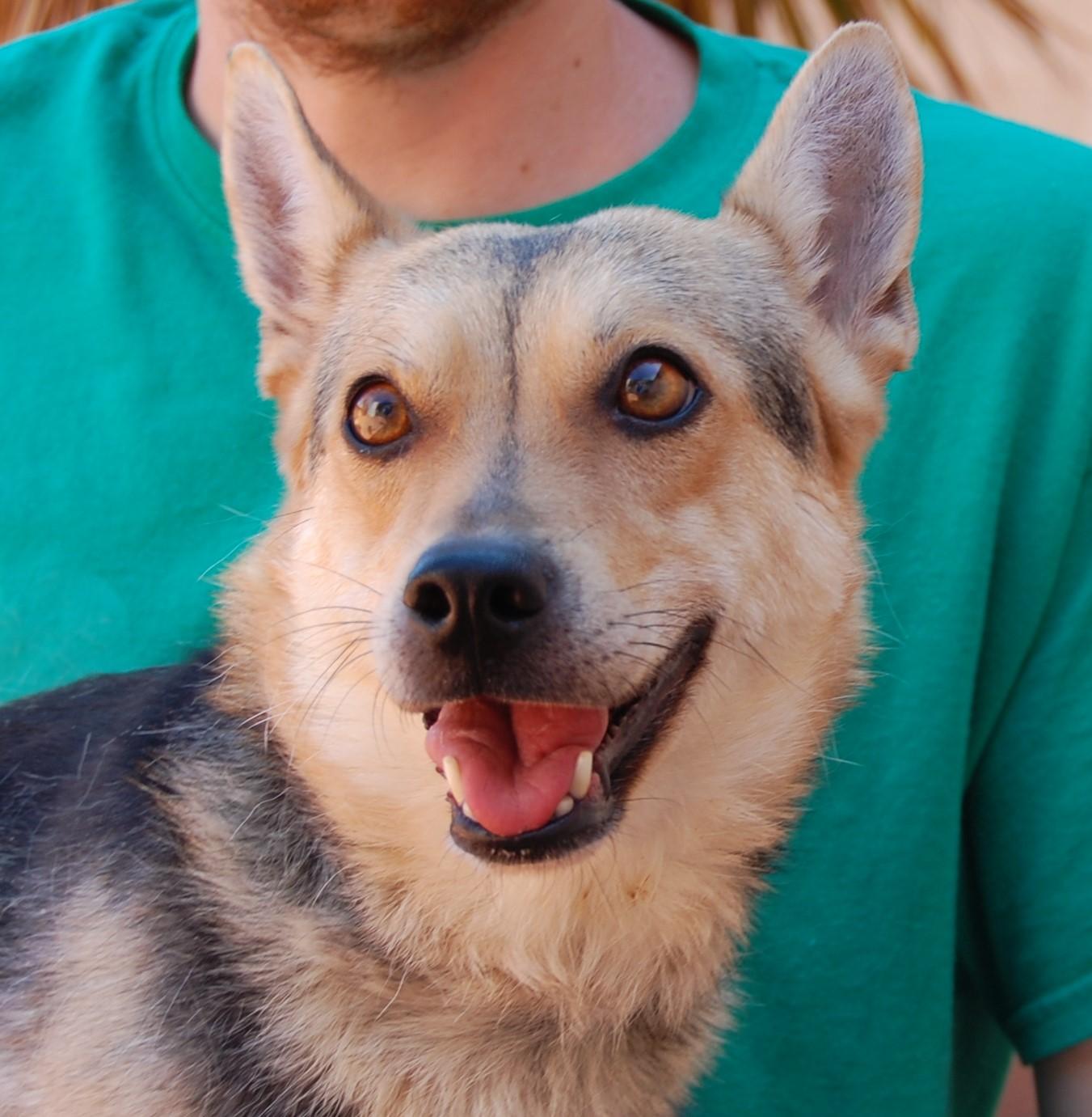 Nevada spca animal rescue kelly for Dog pound las vegas nevada