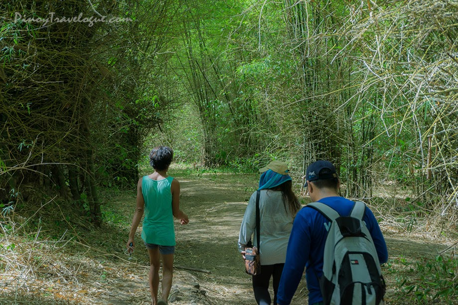 Bamboo grove on the trail of Mt. Tagapo