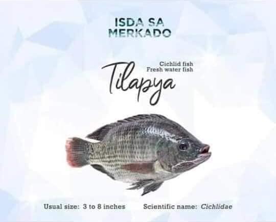 Isda Tilapya (Cichlid Fish / Freswater Fish)