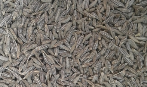 How Much Jeera/Cumin Seeds You Should Eat Daily