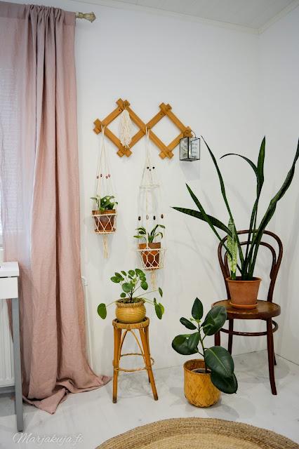 huonekasvi viherkasvi sisustus koti piilea anopinhammas anopinkieli syksy kotoilu huonekasviviikko