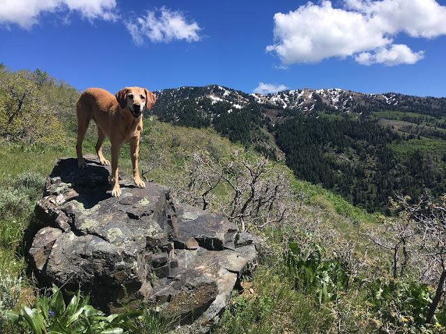 Hiking the Kenny Creek Trail