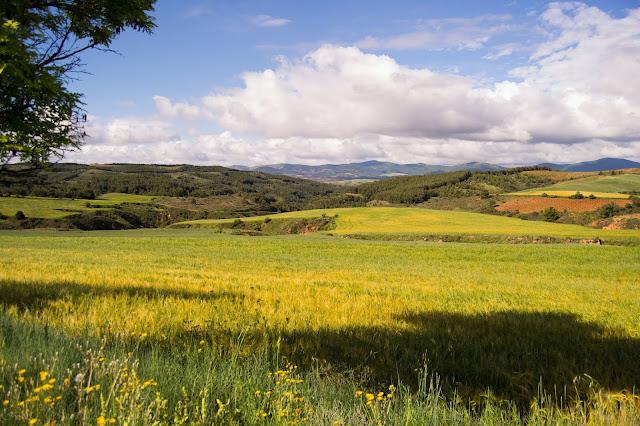 Campos de Aragón - Rosa Romero