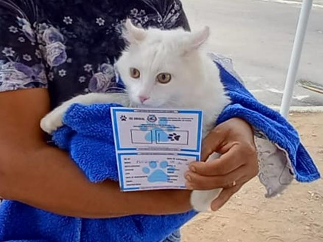 Araruna vacina mais de 700 cães e gatos contra raiva