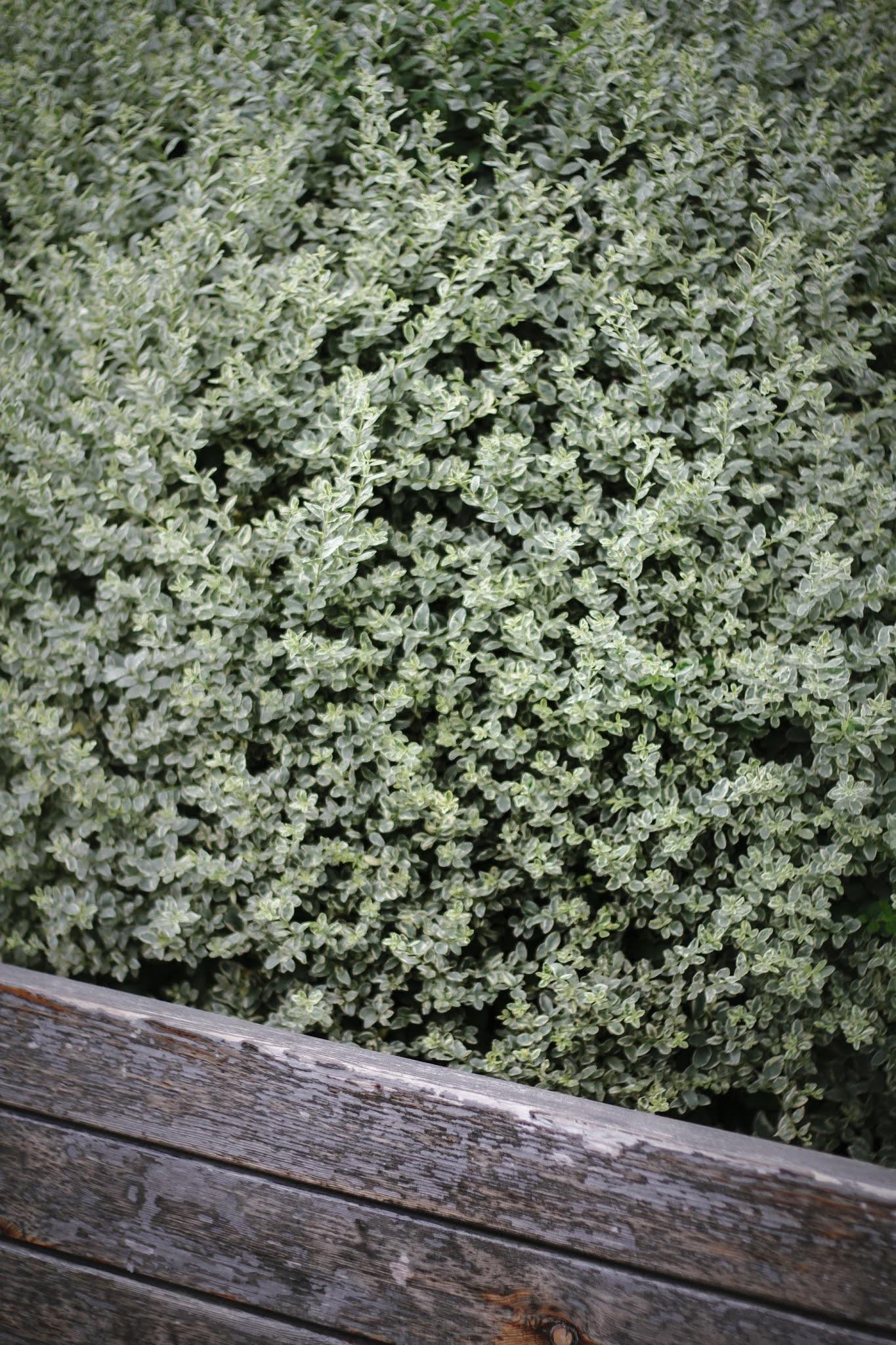 Odmień swój ogród na wiosnę ze Szkółką Roślin Konieczko!