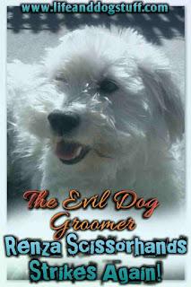 The Evil Dog Groomer - Renza Scissorhands Strikes Again!
