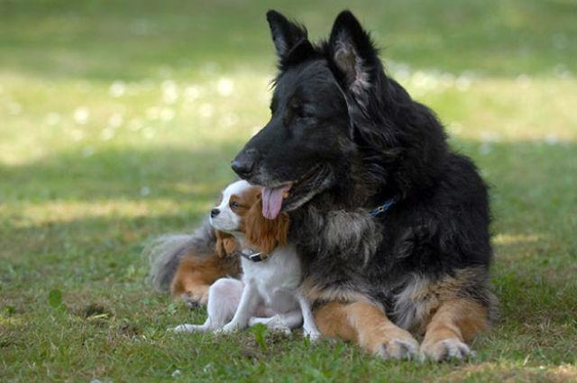 Histórias emocionantes que provam que animais têm Alma