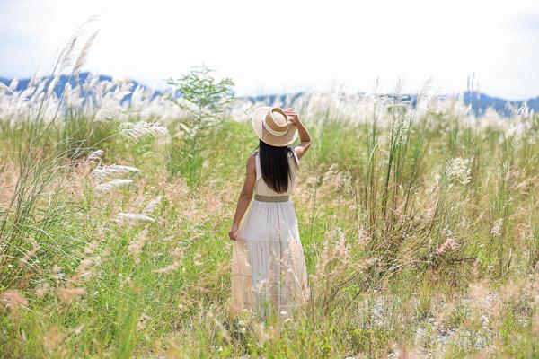 台中后里大安溪畔甜根子草開滿整座河床,火炎山下雪白世界好療癒