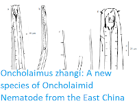 http://sciencythoughts.blogspot.co.uk/2017/09/oncholaimus-zhangi-new-species-of.html