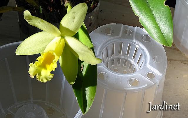 Vasos de plástico transparente para orquídeas
