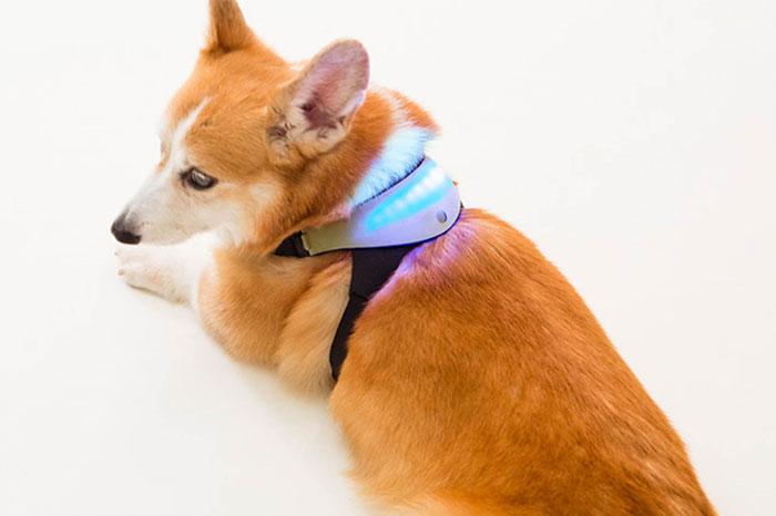 Thiết bị giao tiếp với thú cưng (chó)
