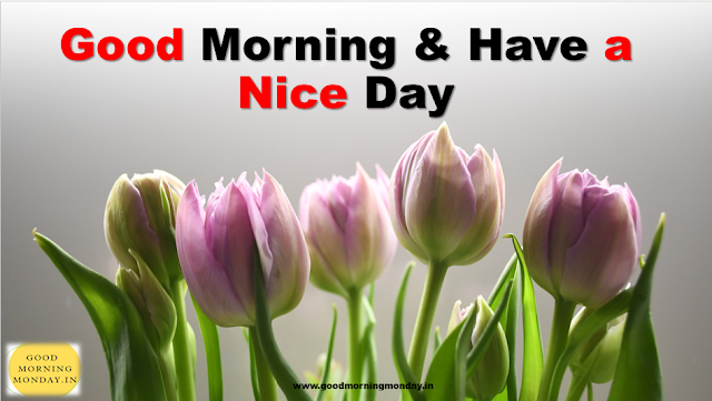 Image of Good morning have a nice day reply | what is the replay of Good morning have a nice day