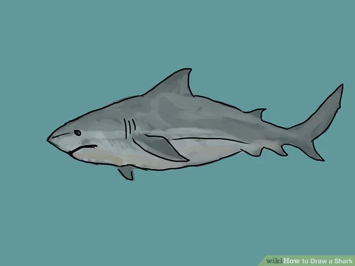 gambar ikan paus