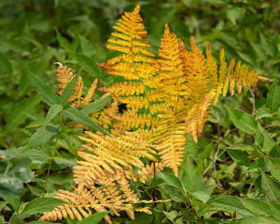 Pinewood Bracken, Indiana Dunes National Park