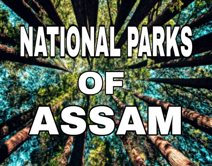 Best National Parks in Assam for Tourists