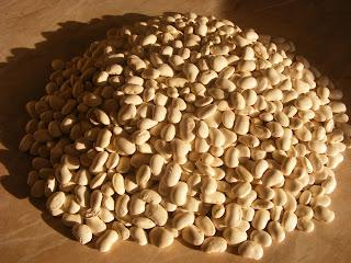 fasole uscata, fasole boabe, retete cu fasole, preparate din fasole, cum se face mancarea de fasole, mancaruri de fasole,