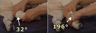 articulação do punho do cão