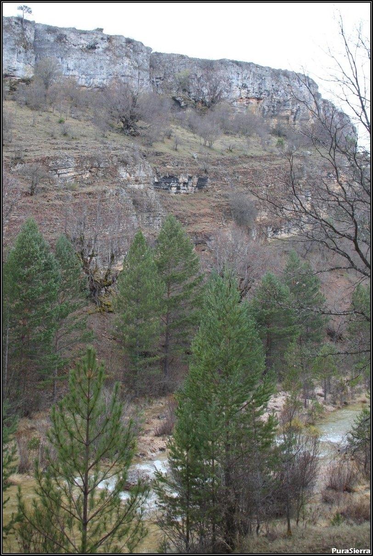 Vista del Río Tajo y de los tilos de su orilla izquierda (Beteta)