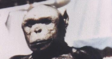 Bigfoot Evidence: Oliver The Famous Upright Walking Chimp ...